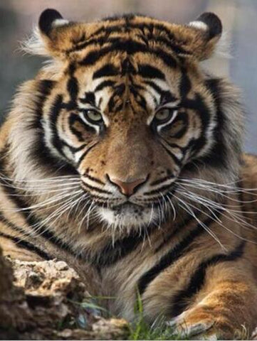 Image of Tiger #2 - DIY Diamond Painting