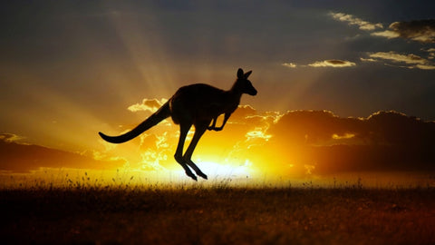 Kangaroo in Sunset - DIY Diamond Painting