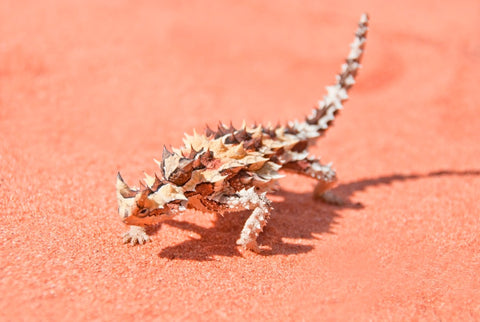 Image of Thorny Devil - DIY Diamond Painting