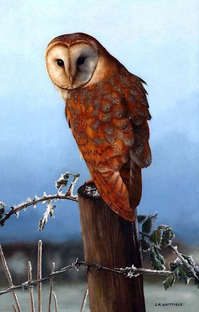 Brown Owl - DIY Diamond Painting