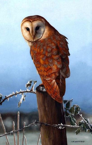 Image of Brown Owl - DIY Diamond Painting
