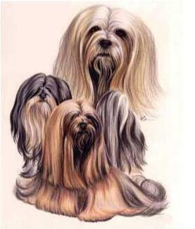Terrier in their Long Hair - DIY Diamond  Painting