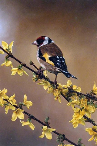 Image of Carduelis - DIY Diamond Painting
