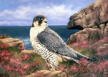 Hawk - DIY Diamond Painting