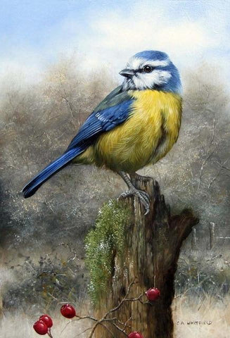 Image of Blue Tit - DIY Diamond Painting