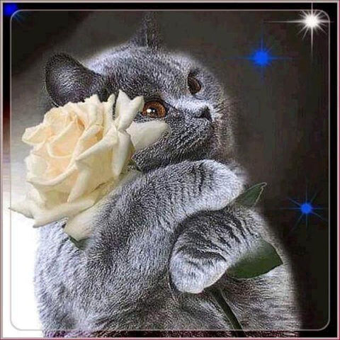 Image of Cat Hugging a Flower - DIY Diamond Painting