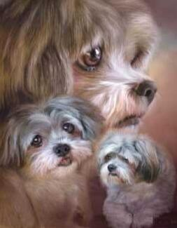 Image of Fluffy Dogs - DIY Diamond  Painting