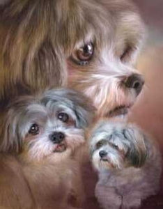 Fluffy Dogs - DIY Diamond  Painting