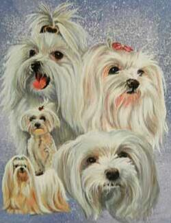Image of Yorkshire Terrier Dogs - DIY Diamond  Painting