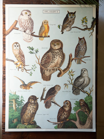 Vintage Poster/Gift Wrap - Owls