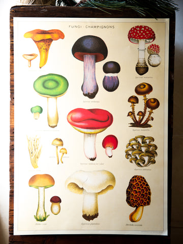 Vintage Poster/Gift Wrap - Champignons