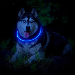 USB Rechargeable Glowing Dog  Flashing  Collars for Small Medium Large Dog