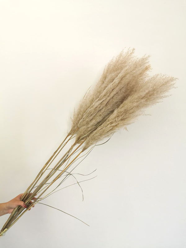 *New* Tall Natural White Dried Pampas Grass | 5 stems