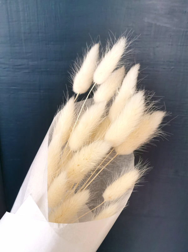 Dried Ivory Bunny Tail | Lagurus | 20pc