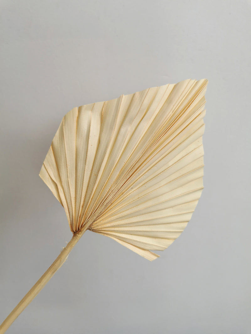 Bleached dried exotic palm spear bunch