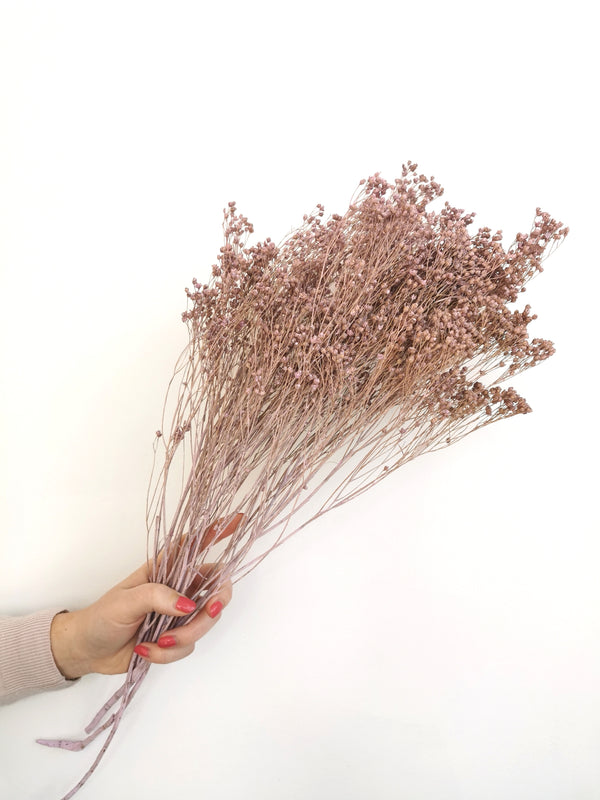 Misty Lilac Broom Bloom | Dried Flowers
