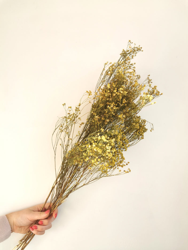 Natural Broom Bloom | Dried flowers