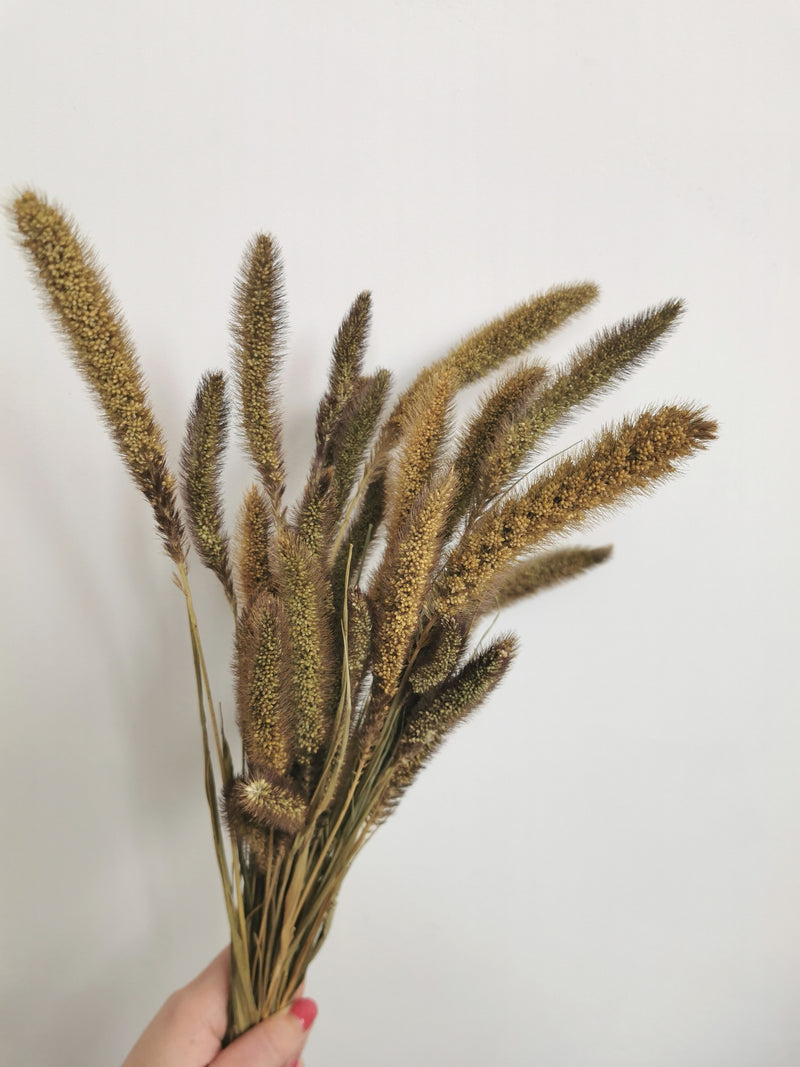 Natural Setaria Fluffy Dried flower bunch