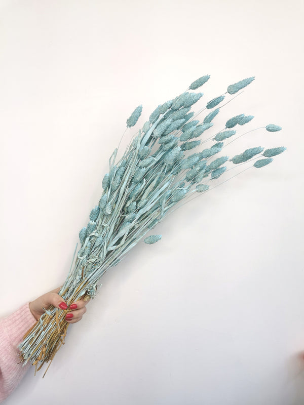 Dried Pastel Blue Phalaris | flower bunch