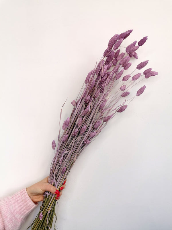 Dried Pastel Purple Phalaris | flower bunch