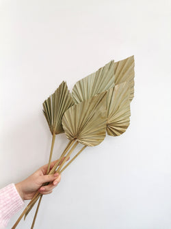 Palm Spears Natural Dried Flower Bunch X5