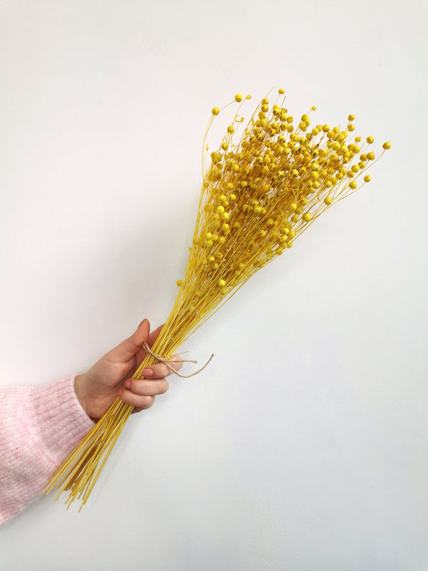 Flax Yellow Dried Flower Bunch (Linum)