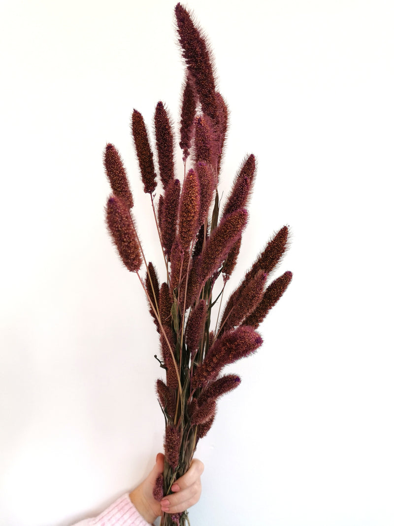 Setaria Purple Fluffy Dried flower bunch