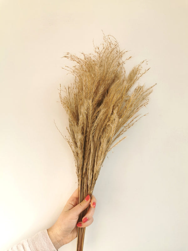 Dried 'Reed' Pampas Grass