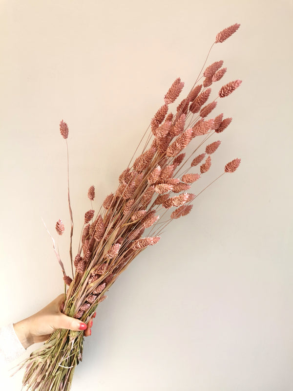 Pastel Pink Phalaris | Dried Flowers