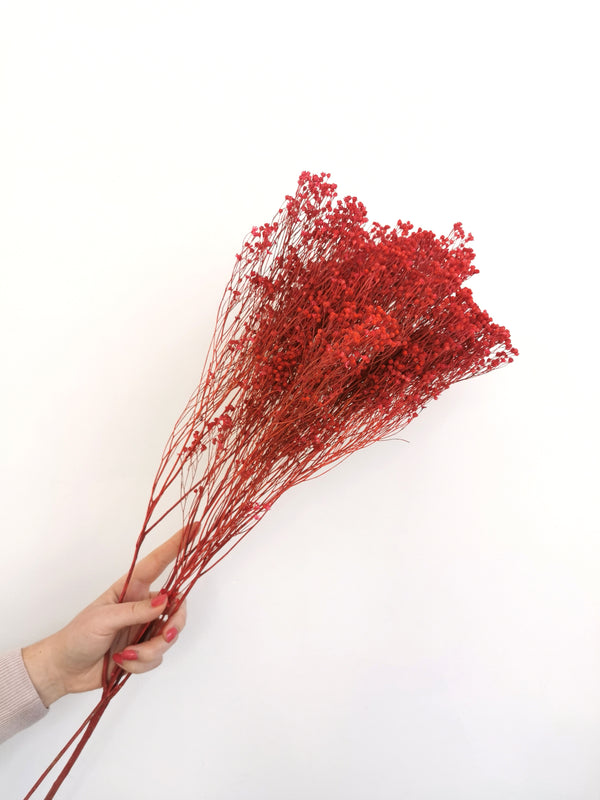Pinky Red Broom Bloom | Dried Flowers