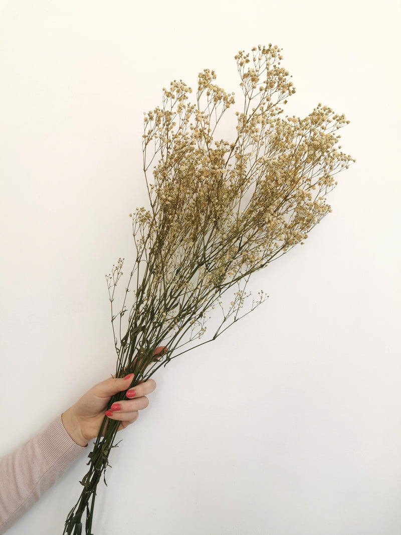 Natural Dried Gypsophila |Flower Bunc