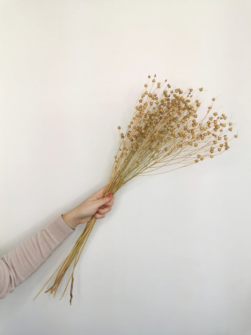 Flax (Linum) Natural Dried Flower Bunch