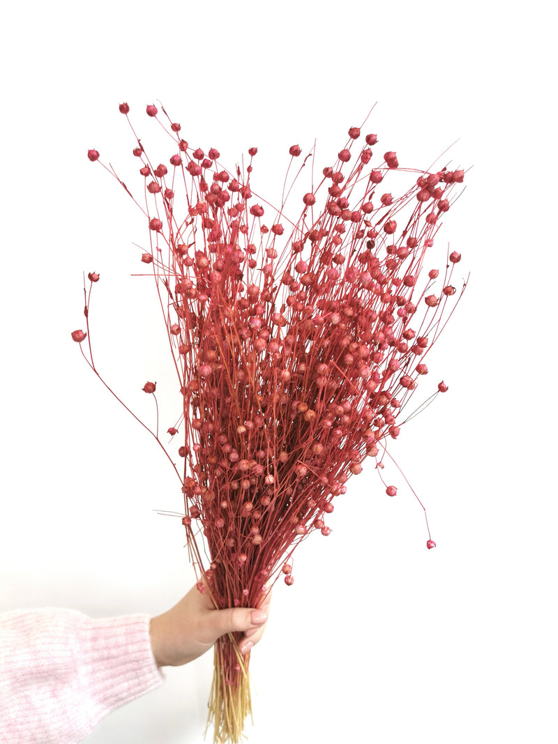 Dried Pink Flax (linum Dried Flower Bunch