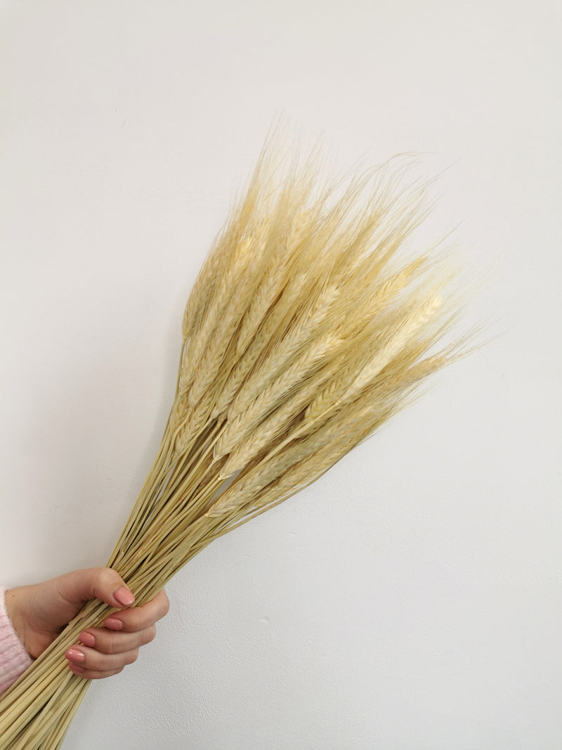 White Wheat 'Triticale' Dried Grass Bunch