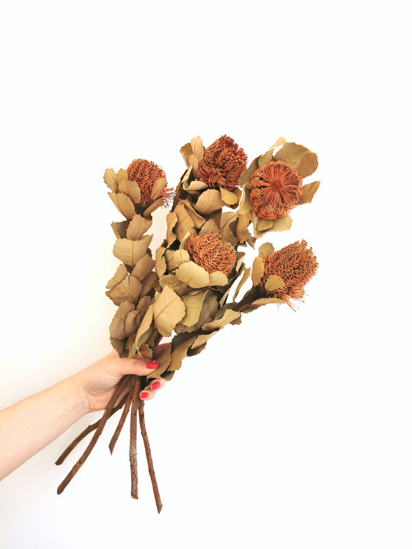 Banksia Natural Dried Flower Bunch