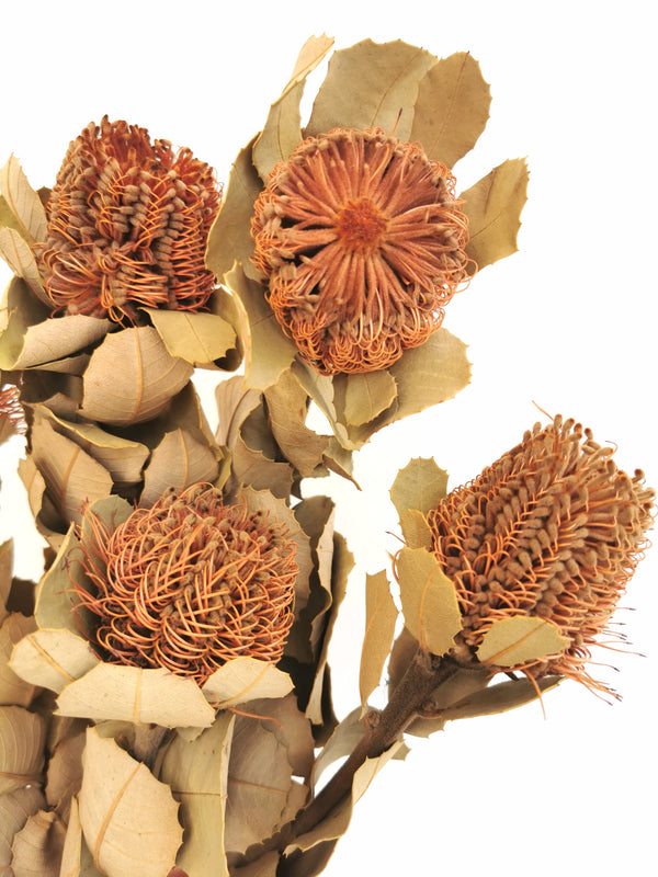 Banksia Natural Dried Flower Bunch small