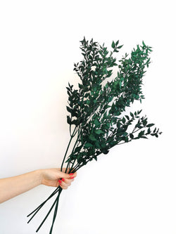 Preserved Emerald Green Ruscus | Dried flower bunch