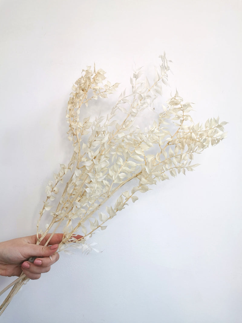 Preserved Ivory Ruscus | Dried flower Bunch