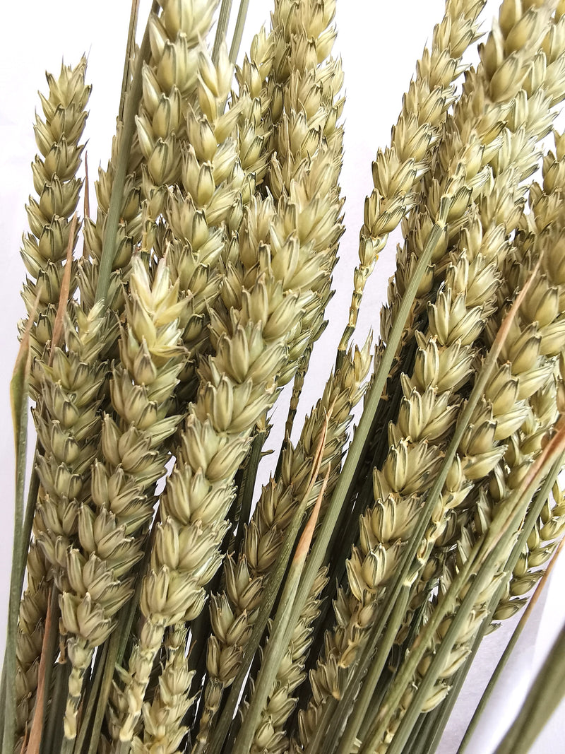 *New* Tarwe Natural Green Wheat Dried | Dried Flower Bunch