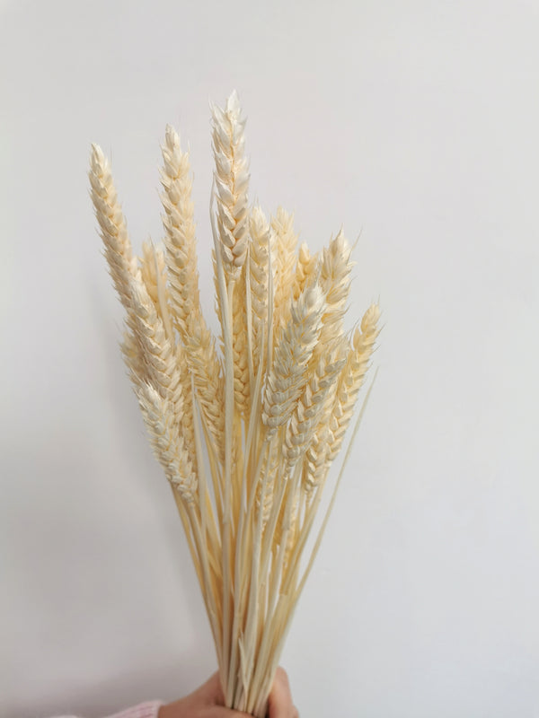 Dried Bleached Wheat