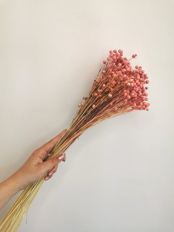 Dried Blush Pink Flax (Linum)