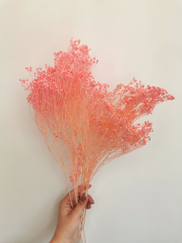 *New* Dried Pink Broom Bloom