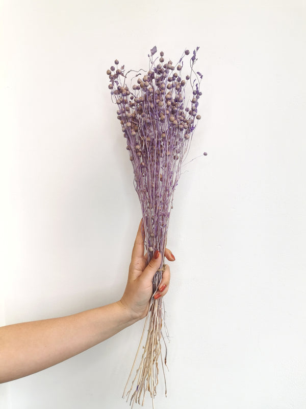 *New* Purple Dried Flax (Linum)