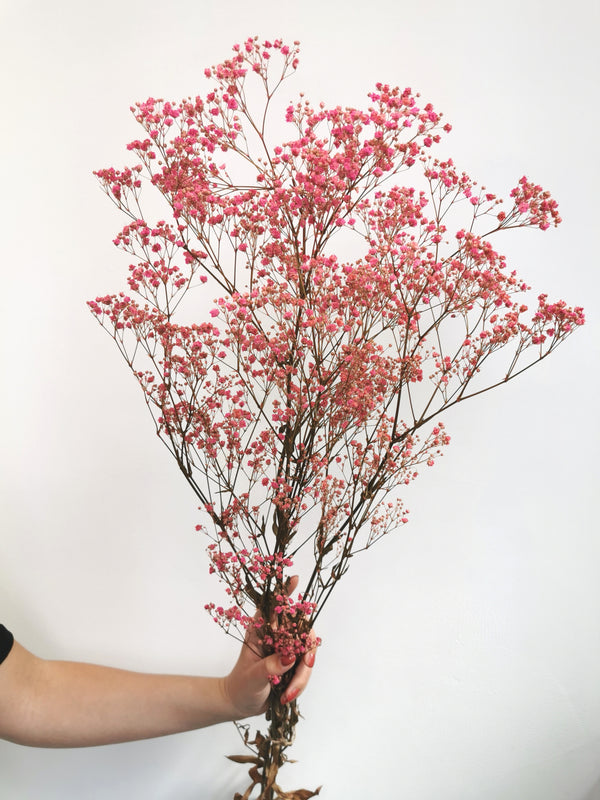 *New* Pink Preserved Gypsophila |Flower Bunc