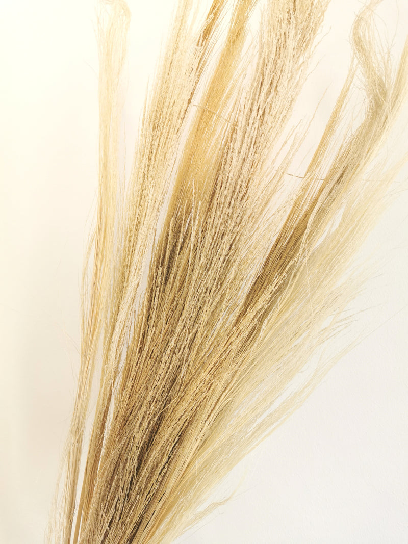 Dried Whispy Broom Grass