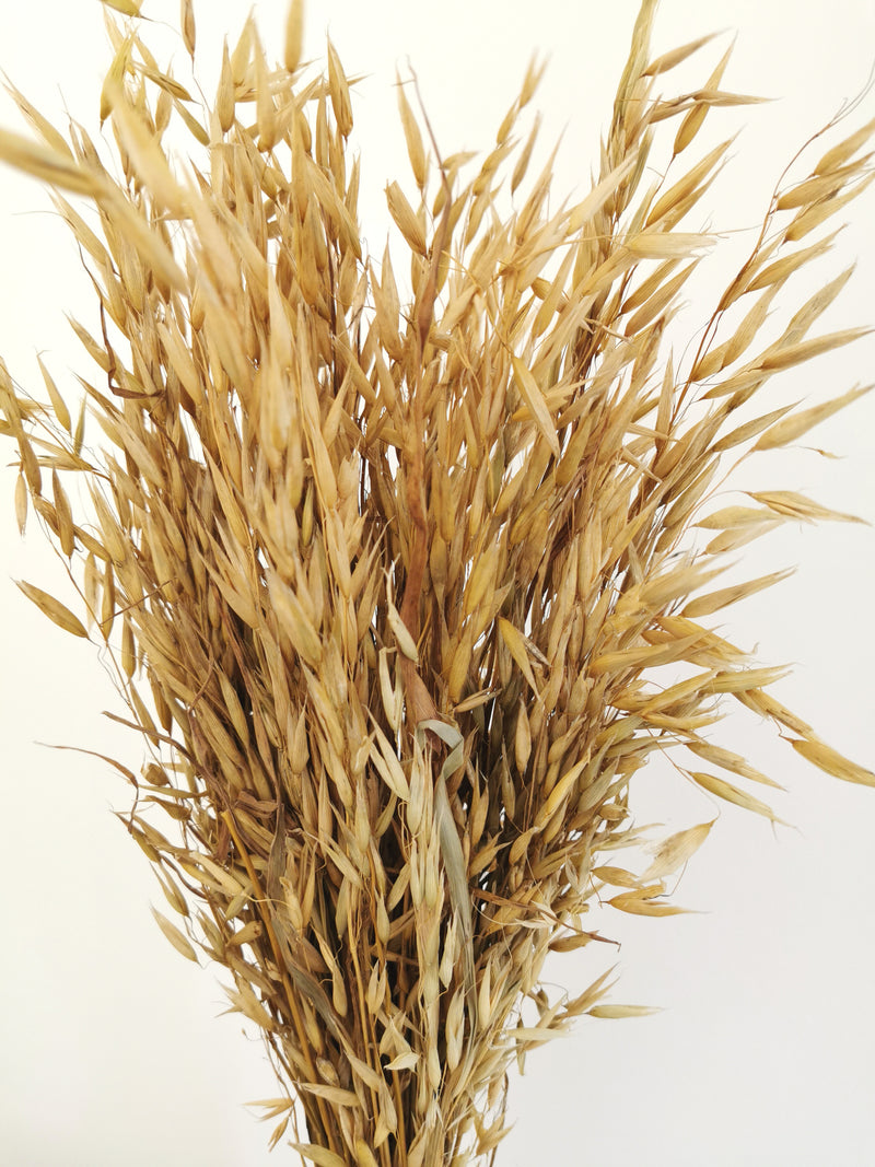 *New* Natural Oats Dried Flower bunch