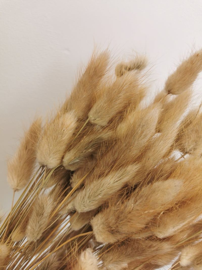 *PROMO* Dried Natural Bunny Tails | Lagurus | 100pc