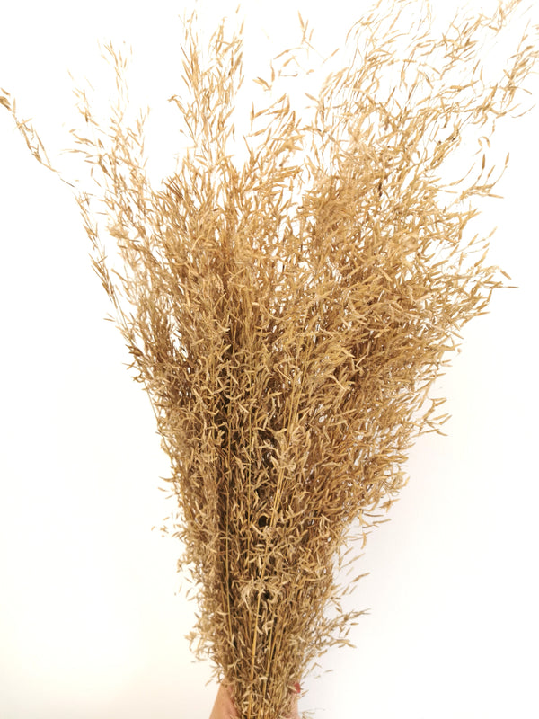 *New* Natural Muni Grass Flower bunch