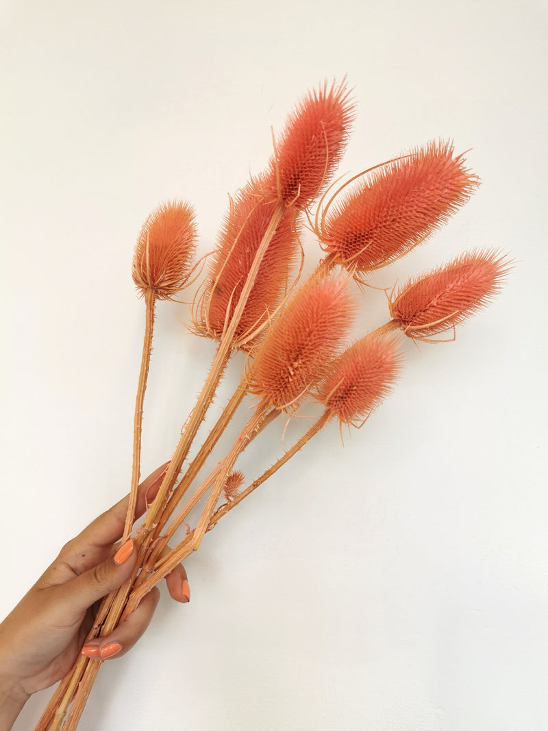 *NEW* Dried Pink Thistles