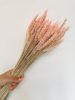 *NEW* Blush pink Dried wheat